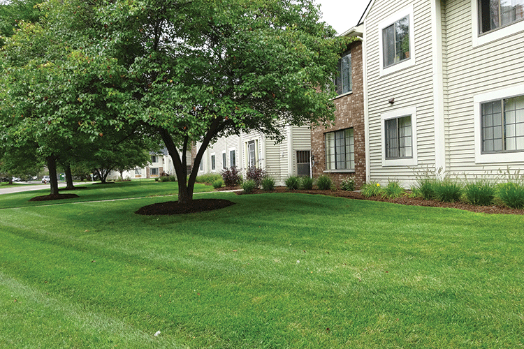 What You Need to Know About Spring Lawn Preparation
