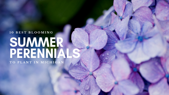10 Summer Blooming Perennials to Plant in Michigan